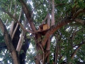 Owl nest box in tree